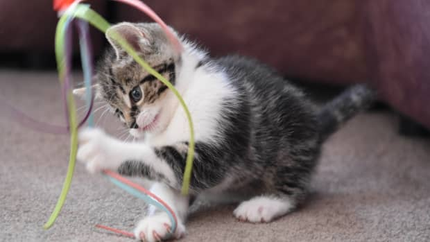 15-cat-facts-you-will-love-it