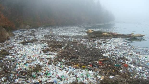 battling-plastic-pollution-one-cup-at-a-time