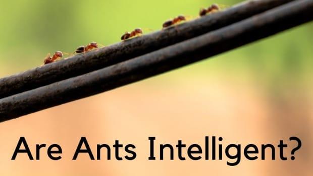 intelligent_ants