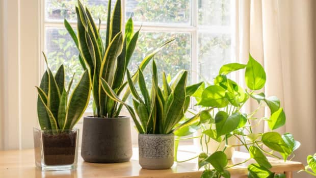 which-are-the-different-indoor-plants-we-can-use-in-our-house-and-the-ways-to-protect-it