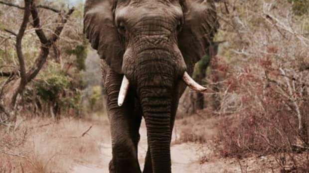 the-top-ten-safari-destinations-in-kenya