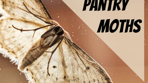 how-to-get-rid-of-moths-in-your-house