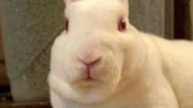 rabbit-photography