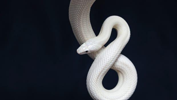 strange-superstitions-involving-animals