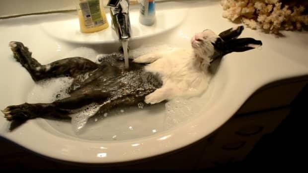no-baths-for-bunnies