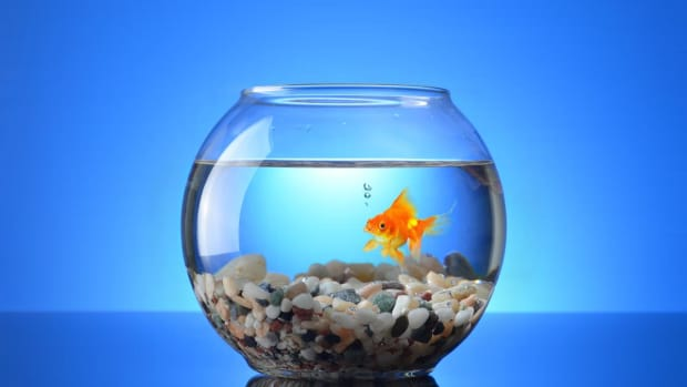 different-types-of-aquariums-for-your-home