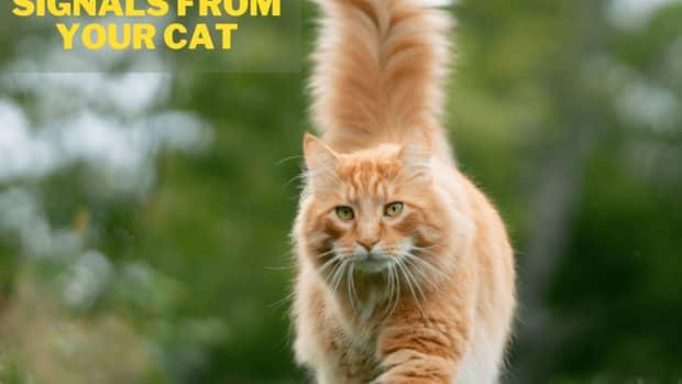 cat-body-language-pictures