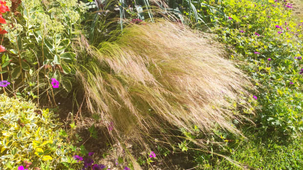 3-great-garden-grasses-to-add-texture-and-movement-to-your-garden