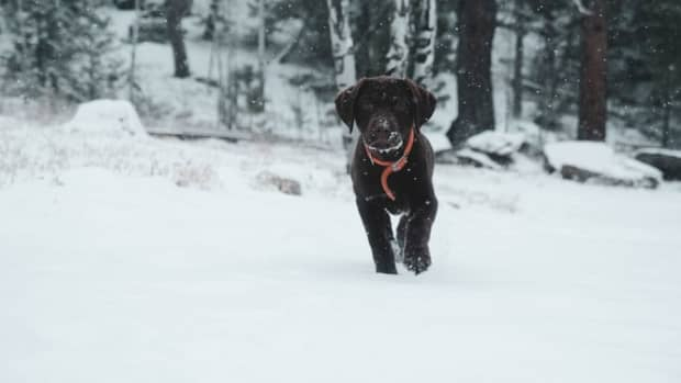 how-to-protect-your-dogs-feet-in-winter