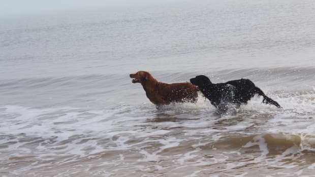 the-dangers-of-water-intoxication-in-dogs