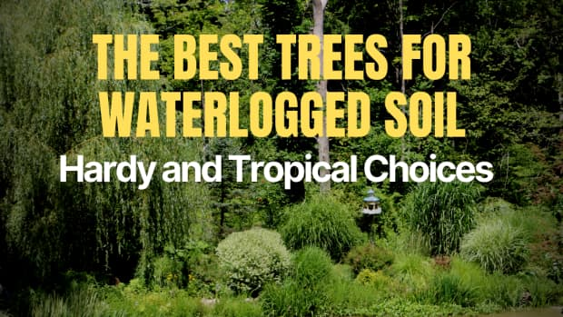 11-trees-that-like-wet-soil-plus-growing-tips-and-faqs