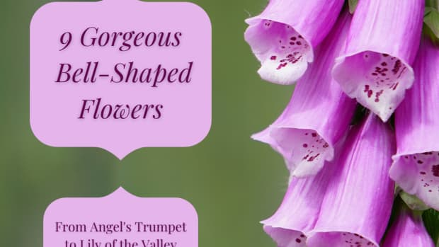 all-those-bell-shaped-flowers