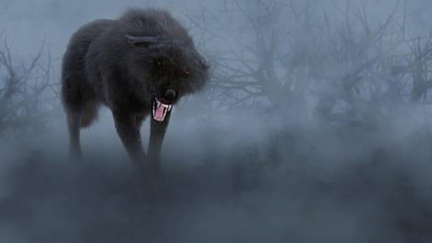 superstitions-and-legends-regarding-wolves