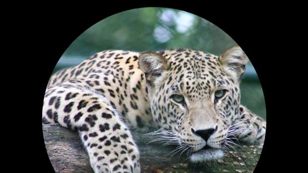 tips-to-take-amazing-animal-photos