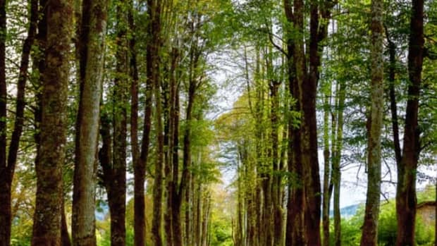 importance-of-forests-in-our-life