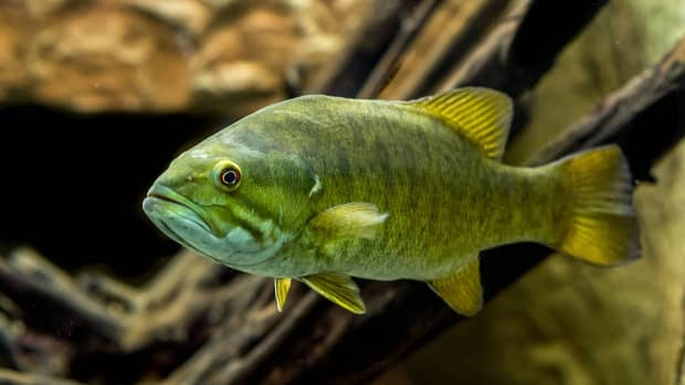 can-you-keep-wild-fish-as-pets-in-your-home-aquarium