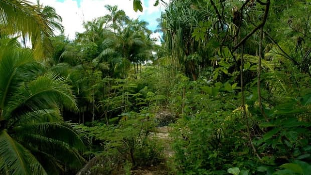 guam-wildlife-ritidian-refuge