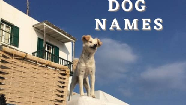 140-greek-dog-names-with-meanings