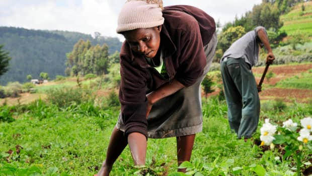 why-a-frail-agriculture-cannot-savage-kenyas-overrated-economy