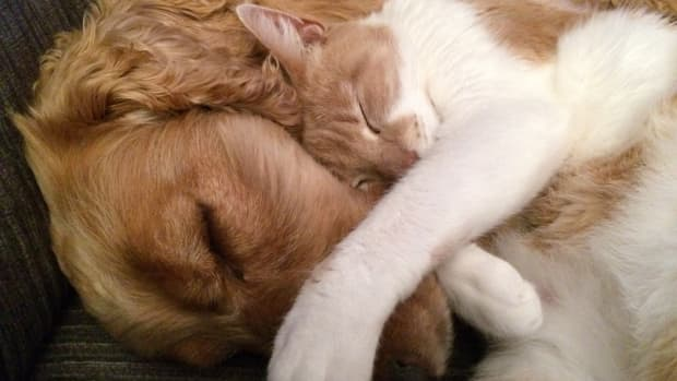 the-dangers-of-toxoplasmosis-in-dogs