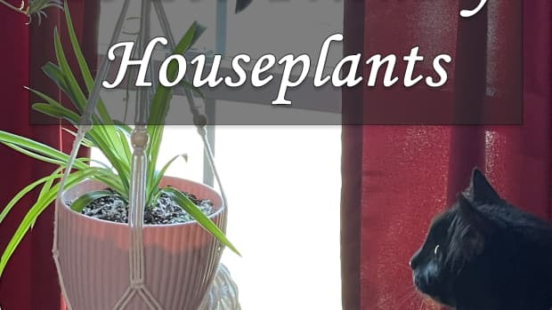 10-pet-friendly-houseplants-that-are-safe-for-cats-and-dogs