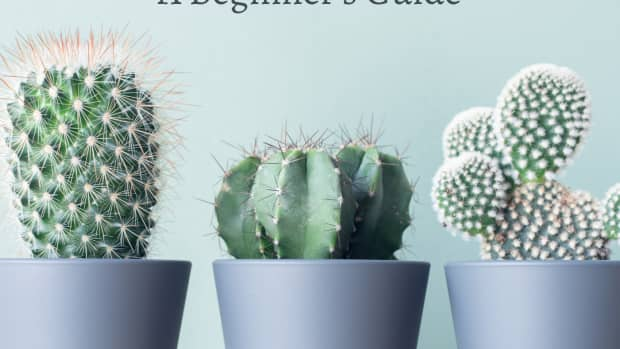 how-to-repot-a-cactus-without-getting-hurt