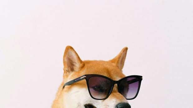 dog-grooming-advertising-ideas
