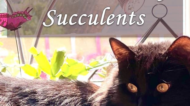 10-pet-friendly-succulents-that-are-safe-for-cats-and-dogs