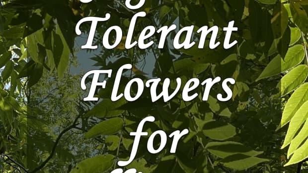 10-pollinator-friendly-perennial-flowers-that-grow-well-near-black-walnut-trees