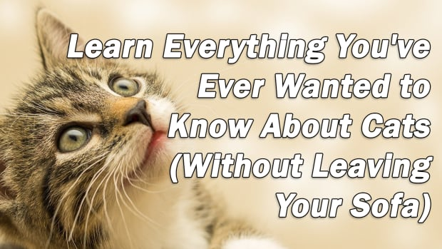 cat-behavior-summit-learn-everything-youve-ever-wanted-to-know-about-cats-without-leaving-your-sofa