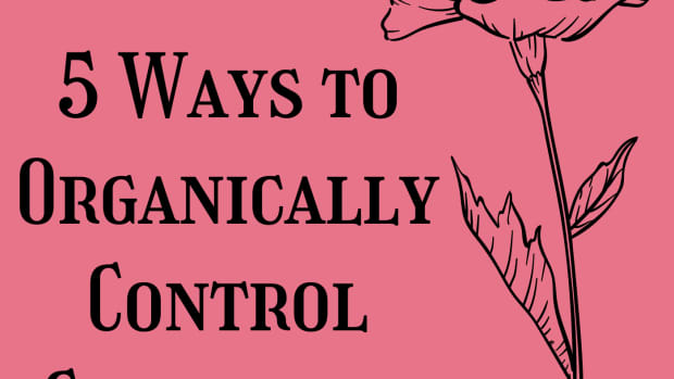 5-ways-to-control-cutworms-in-your-garden-safely-and-naturally