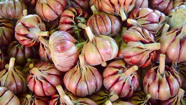 how-to-store-and-preserve-garlic