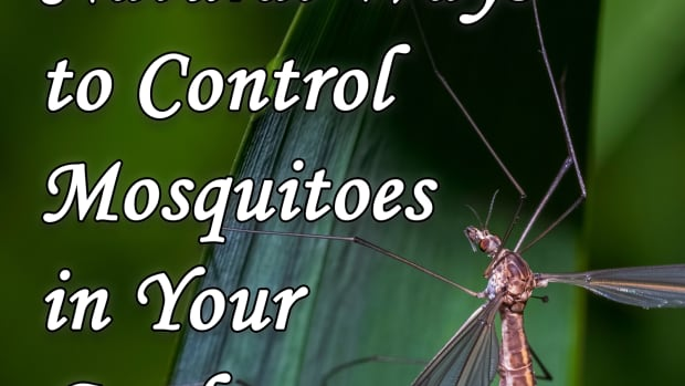 natural-ways-to-control-mosquitoes-in-your-garden