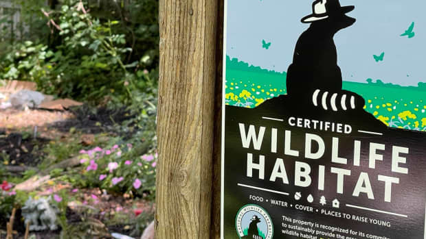 how-to-turn-your-own-backyard-into-a-certified-wildlife-habitat