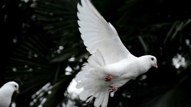 bible-verses-on-the-holy-spirit