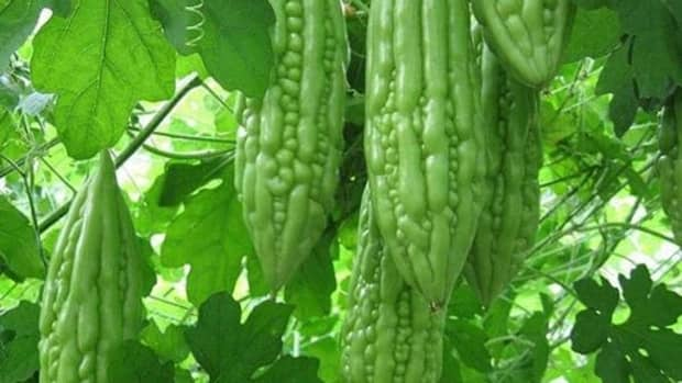 the-not-so-bitter-benefits-of-bitter-gourds