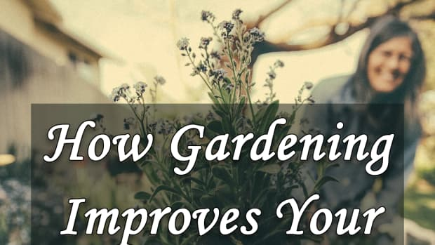 how-gardening-improves-your-mental-health