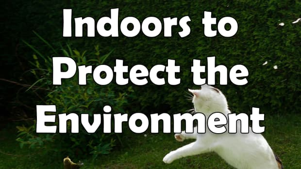 keep-your-cat-indoors-to-protect-the-environment