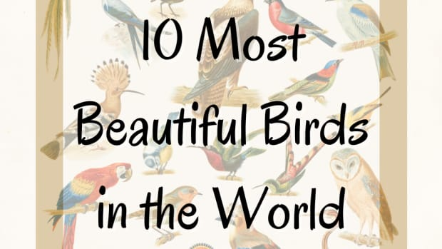 10-most-beautiful-birds-on-planet-earth