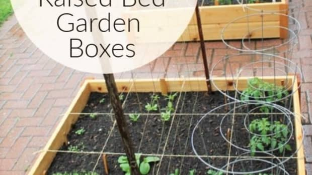 6-reasons-to-plant-your-own-organic-vegetable-garden-at-home