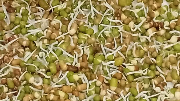 how-to-sprout-moong-mung-beans-and-matki-moth-beans