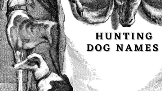 275-hunting-dog-names-with-meanings