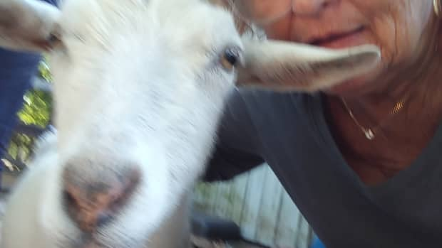the-goat-farm-camping-and-traveling-reviews
