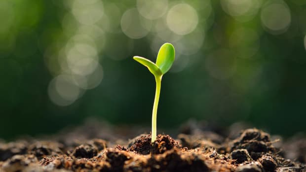 life-planting-it-the-right-way