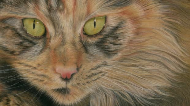 a-interview-with-one-of-wiltshires-pet-portrait-artists
