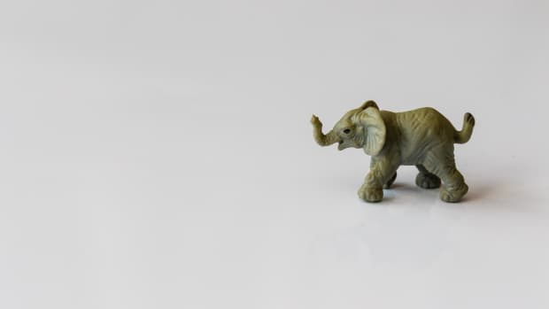 an-elephant-in-the-room
