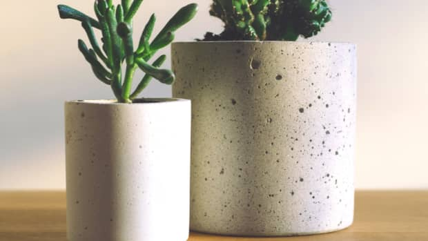 do-cacti-and-succulents-need-direct-sunlight