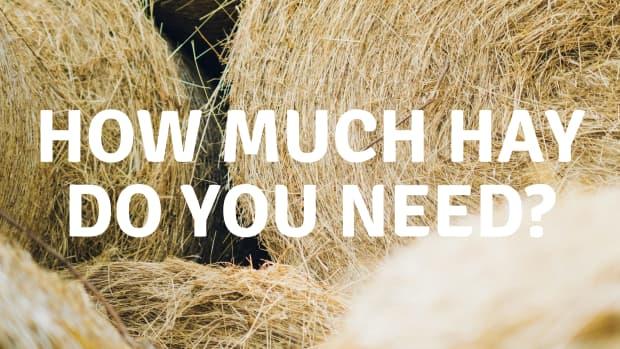 how-much-hay-do-i-need