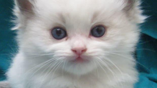 common-behaviour-about-cat