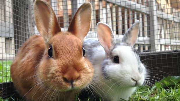 rabbit-happiness-and-longevity